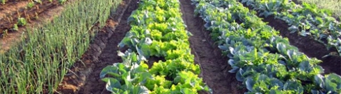 organic-crops2